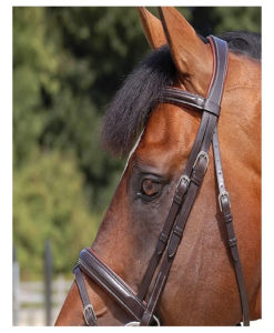 Dy'on Classic Wide Crank Noseband Bridle