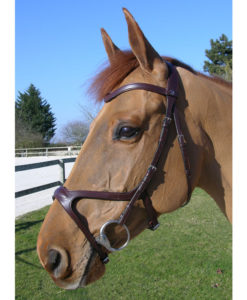 Dy'on X Fit Anatomic Bridle