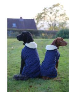 Kentucky Horsewear Dog Coats 2