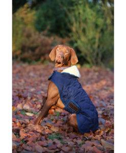 Kentucky Horsewear Dog Coats 4