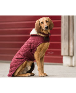Kentucky Dogwear Bordeaux Dog Coats