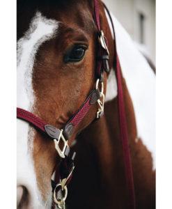 Kentucky Horsewear Plaited Nylon Head Collar Bordeaux 2