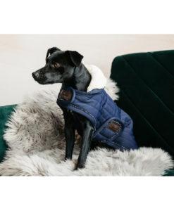 Kentucky-dogwear-coat-pearls