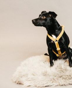 Kentucky Dogwear Dog Harness Loop Velvet